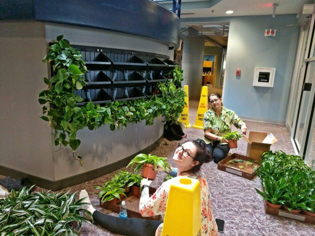 Botanicus Living Green Wall Plantups
