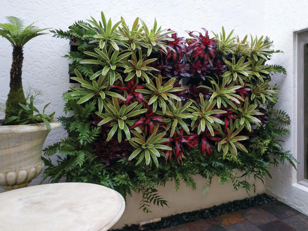 Atrium Green Walls Estero, Florida