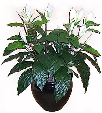 3' Silk Peace Lily, Double