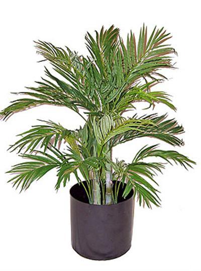 3' Silk Areca Palm Bush